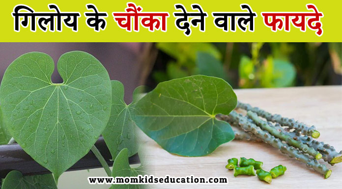 गिलोय के फायदे - Health Benefits of Giloy